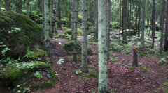 Moss-covered trees in park of Monrepo - Vyborg Russia Stock Footage