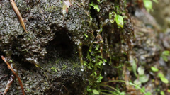 Wet moss and foliage in the rocks of a forest Stock Footage