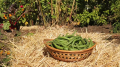 Green beans basket Stock Footage
