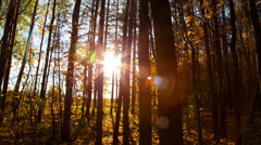 Beautiful autumn forest with sun shining - dolly shot Stock Footage