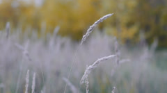 Wind Shakes A Dried Grass Stock Footage