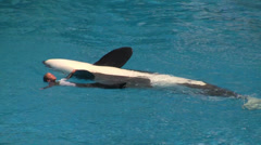 Shamu and Trainer Waving at Audience Stock Footage
