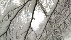 Snowy branches Stock Footage