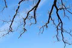 Fractal branches on sky Stock Photos