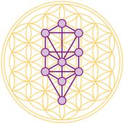 Tree Of Life Fits Perfect In The Flower Of Life - stock illustration