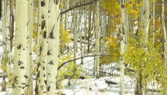 Colorado Winter - stock footage