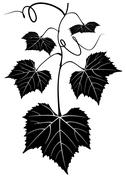 Bunch of grapes Stock Illustration