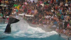 Orca / Killer Whale Splashing Water into Crowd Stock Footage