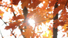 Sun shining through the autumn leaves Stock Footage
