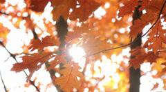 Sun shining through the autumn leaves Stock Footage