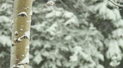 Colorado Winter Stock Footage
