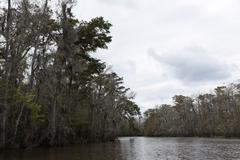 The Swamps in New Orleans Stock Photos