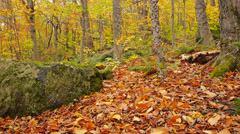 Low angle zoom out Autumn Leaves - P1050089 Stock Footage