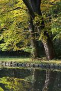 Stock Photo of autumn beauty