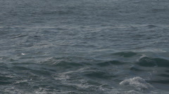 School of Dolphins swimming in the ocean Stock Footage