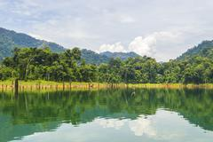 Rain forest at kenyir lake, malaysia Stock Photos