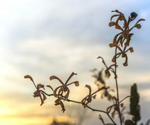 orchids sunset background - stock photo
