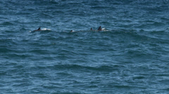 Large school of Dolphins swimming in the ocean Stock Footage