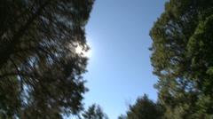 Grounds of Bartlett Arboretum (6 of 7) Stock Footage