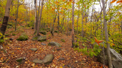 Stock Video Footage of Autumn Trees and Leaves