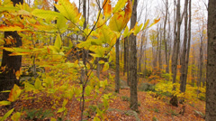 Stock Video Footage of Autumn Yellow Leaves and Trees 2
