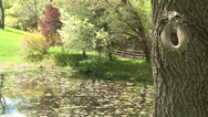 Stock Video Footage of Pond in a hilly meadow (1 of 2)