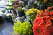 Stock Photo of Fresh flowers at florist shop