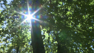 Stock Video Footage of Sunburst through trees in Nature Trail