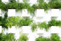 wall of plants - stock photo