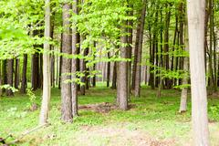Forest trees. nature green wood sunlight backgrounds Stock Photos