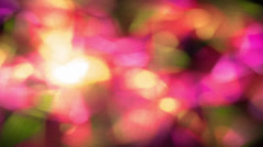 Abstract floral background Stock Footage