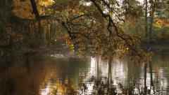 The tree is reflected in the water 4437.mp4 Stock Footage