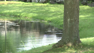 Stock Video Footage of Small swampy pond (3 of 4)