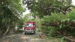 Hurricane Aftermath Huge Tree Lies In Road - stock footage