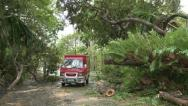 Stock Video Footage of Hurricane Aftermath Huge Tree Lies In Road