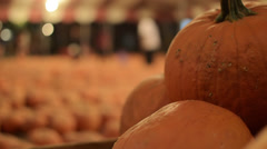 Pumpkins at patch for Halloween Stock Footage