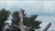 Stock Video Footage of driftwood, seagulls