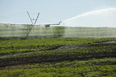 Overhead irrigation - beans crop - brazil Stock Photos