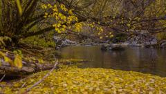 Fall leaves in water on mountain stream Stock Footage