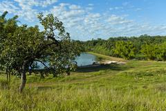 vegetation diversity - stock photo