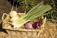 Onion basket Stock Photos