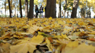 Stock Video Footage of People in the autumn park