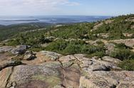 Stock Photo of cadillac mountain vegetation