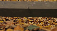Fallen leaves under the bridge. Close up, dolly shot Stock Footage