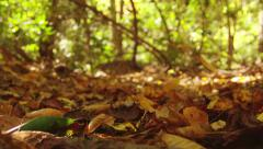 Falling autumn leaves - stock footage