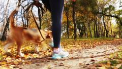 Girl  walk about  with beagle puppy in autumnal park Stock Footage