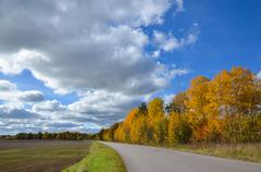 Roadside aspens at fall Stock Photos
