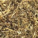 Stock Photo of straw picture