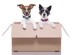 two mail dogs - stock photo