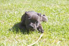 Cute little stuffy pup playing on grass - stock photo